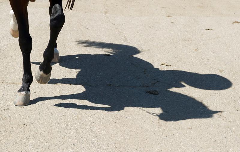 PS_Horses-4.jpg