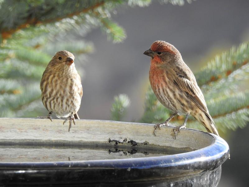 birds (113).JPG
