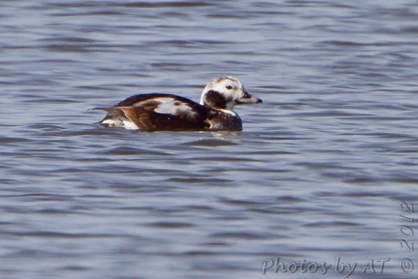 2012-03-01 Riverlands Migratory Bird Sanctuary