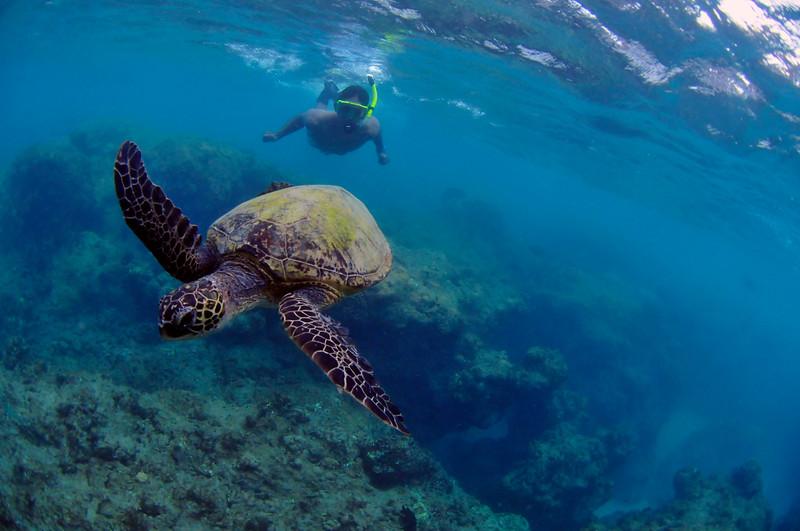 Hawaii - Hanauma Bay-29.JPG