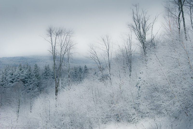 Winter Wonderland in Vermont-10.jpg