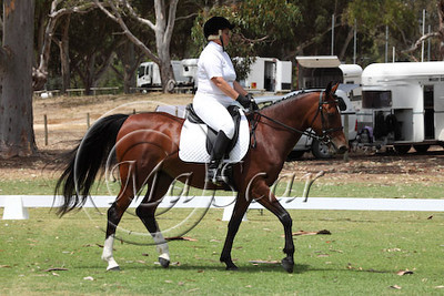 SOUTHERN ARAB UNOFFICIAL DRESSAGE