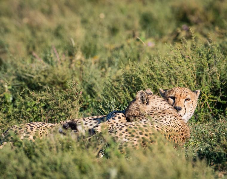 Tanzania_Feb_2018-233.jpg
