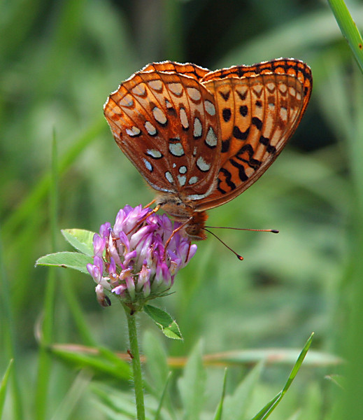 6746 Butterfly.jpg