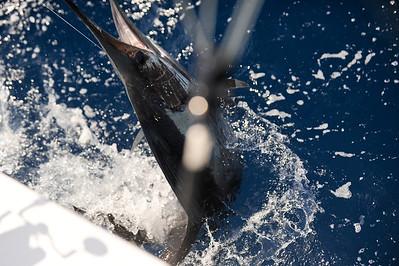 2012-02-25 Sailfish Challenge