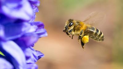 bees flight