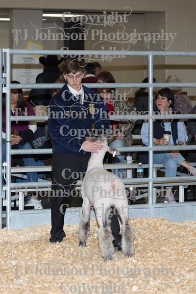 2016 KISD Lamb Show Class 2