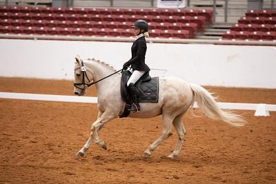Horse 147
