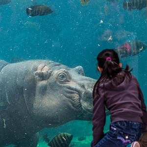 2014.0314 St Louis Zoo