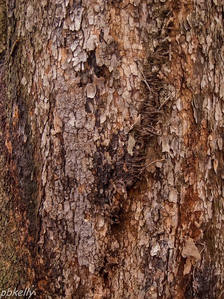 bark 013013-6.jpg