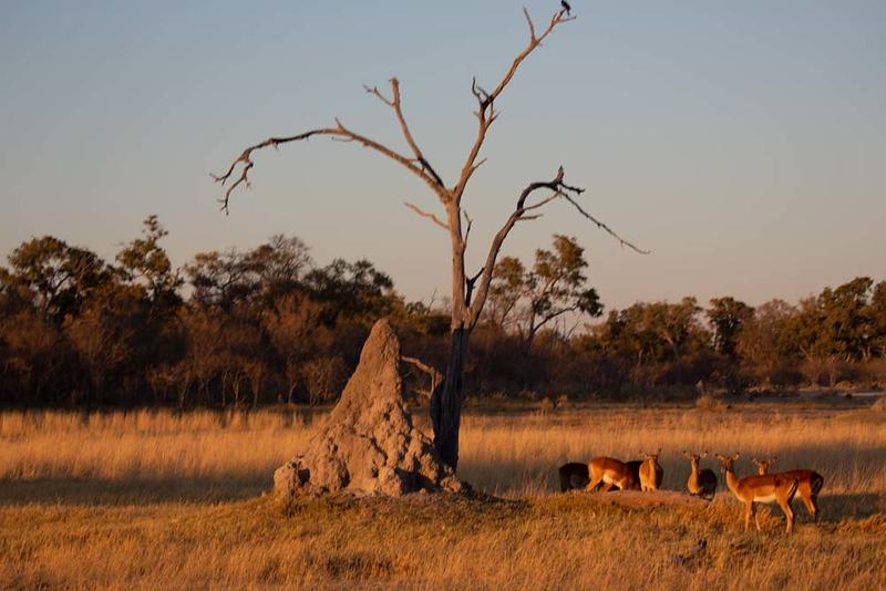 Africa1352.jpg