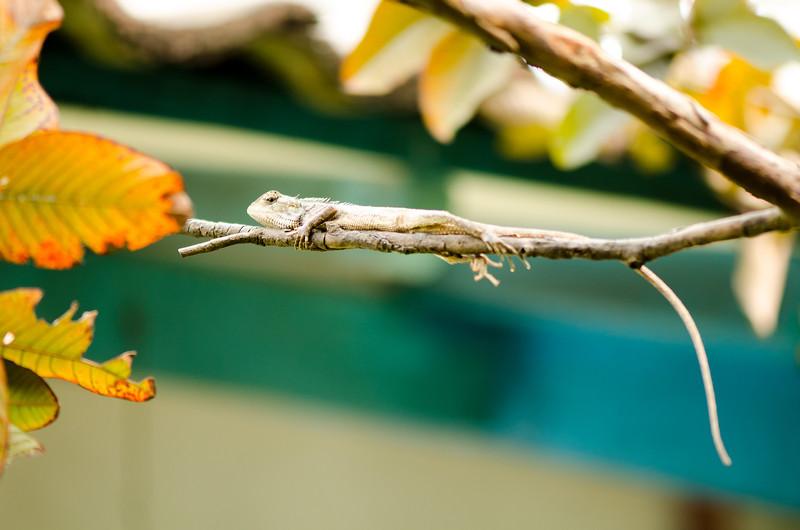 The Little Chameleon