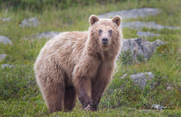 Alaska 2019 Trip