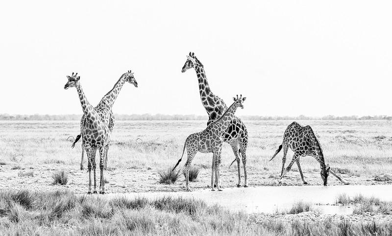 zebres (1 de 1)-3.jpg