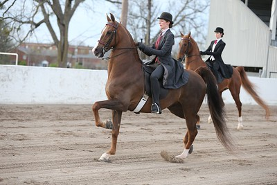 52. Adult 3 Gaited Show Pleasure Championship