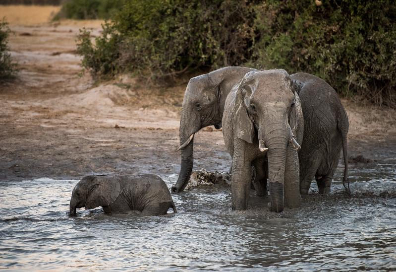 Botswana_June_2017 (4374 of 6179).jpg