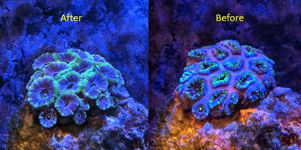 2019-09-10 - Reef Tank Update after raising light intensity from 8 to 20 percent and some nitrates