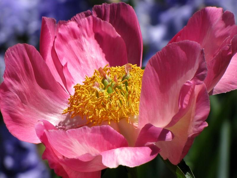 amh FLOWERS (1051).jpg