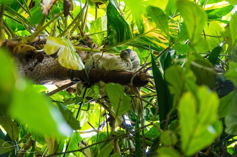 Sloth - Vancouver Aquarium