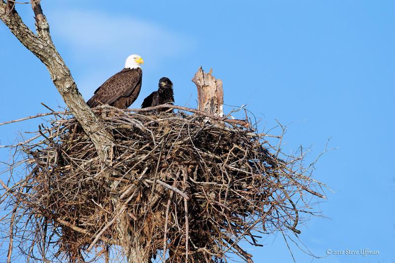 20130228-_G7Q9070cc lockwood eagle shoot-Edit-2.jpg