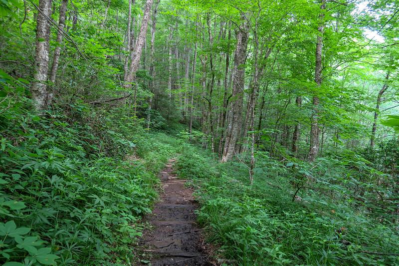 Bridges Camp Gap Trail -- 4,130'
