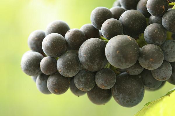 Stubbs Vineyard