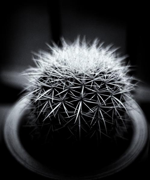 cactus 58 042920-.jpg