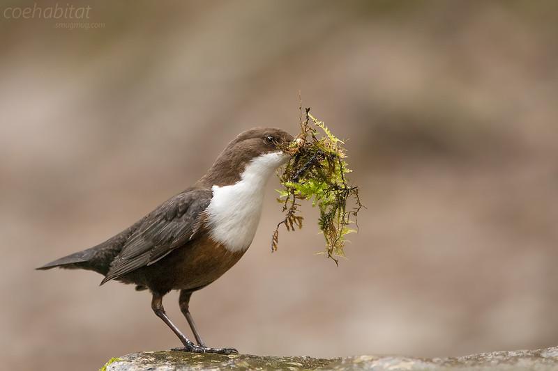 Water and Coastal Birds