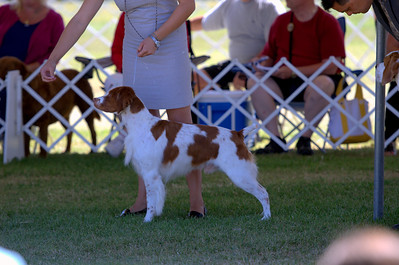 Beverly Hills Kennel Club - Sporting Group