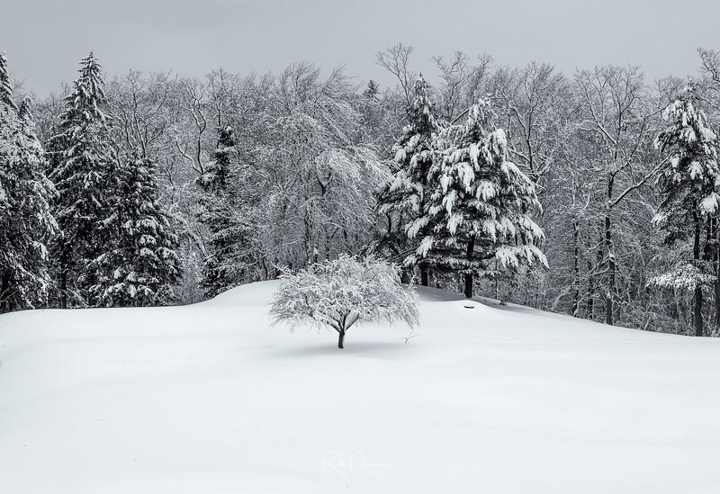 Winter in New England VIII