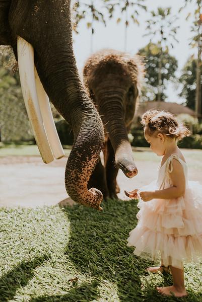 VTV_family_photoshoot_elephants_Bali_ (50).jpg