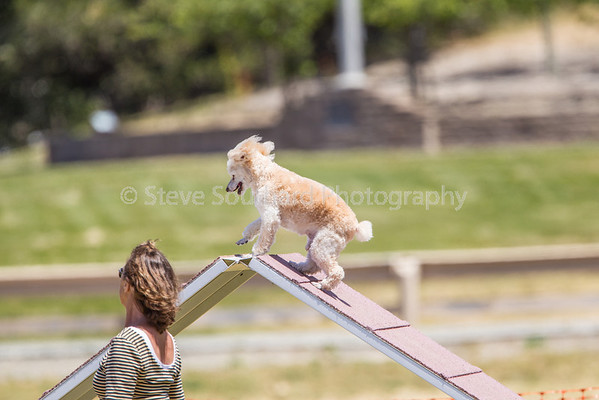 Del Monte Kennel Club Agility Trial June 1, 2014