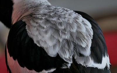 Birdlife4
