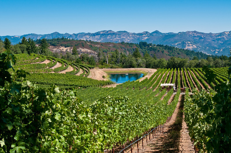 The vineyards at Pride