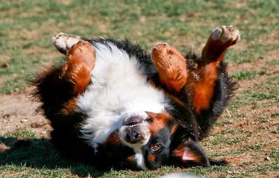 Dogheart Fun!