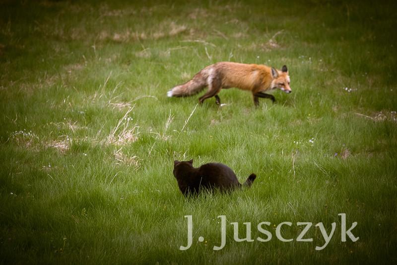 Jusczyk2021-6224.jpg