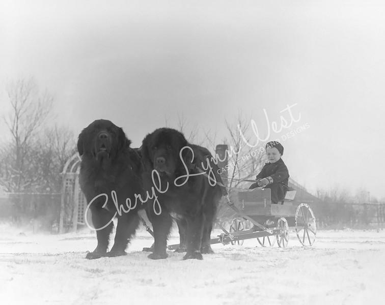 Boy-Newfoundland-Wagon-2-WM.jpg