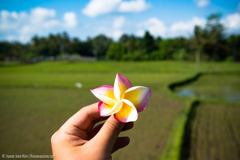 Bali-6103404.jpg