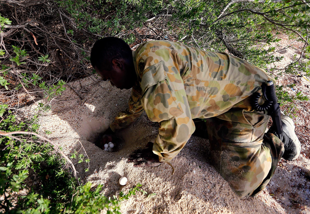 . Lance-corporal Vinnie Rami, an indigenous soldier from Australia\'s North West Mobile Force (NORFORCE) unit, digs for turtle eggs after landing on Wigram Island, part of the English Company Islands, located inside Arnhem Land in the Northern Territory July 18, 2013. NORFORCE is a surveillance unit that employs ancient Aboriginal skills to help in the seemingly impossible task of patrolling the country\'s vast northwest coast. NORFORCE\'s area of operations is about 1.8 million square km (700,000 square miles), covering the Northern Territory and the north of Western Australia. Aboriginal reservists make up a large proportion of the 600-strong unit, and bring to bear their knowledge of the land and the food it can provide. Fish, shellfish, turtle eggs and even insects supplement rations during the patrol, which is on the lookout for illegal foreign fishing vessels and drug smugglers, as well as people smugglers from neighboring Indonesia.  Picture taken July 18, 2013. REUTERS/David Gray