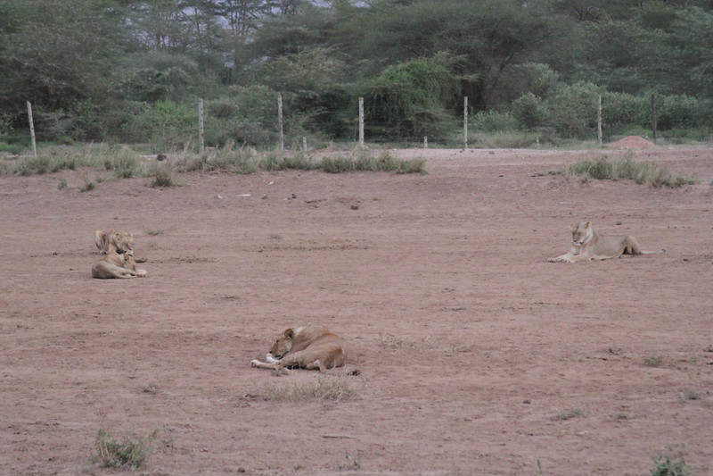 Kenya 2019 #2 1765.JPG