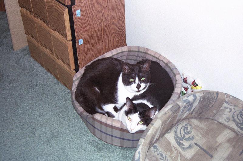 2003 12 - Cats 48.jpg