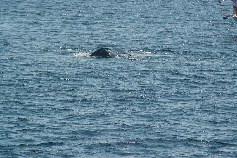 humpbacks-4100.jpg