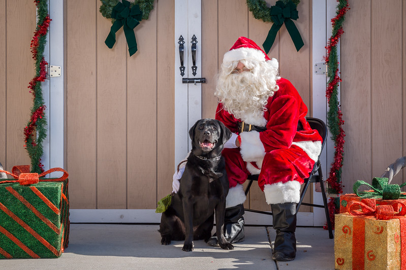 Pet Pictures With Santa-65.jpg
