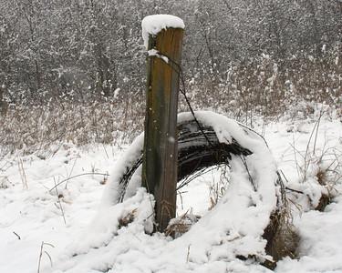 Snow February 5, 2010