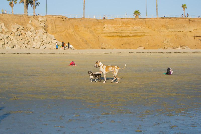 dogs_beach-38.jpg
