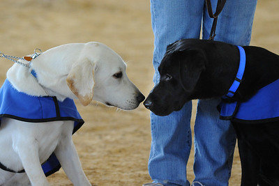 South Florida Working Dog Association