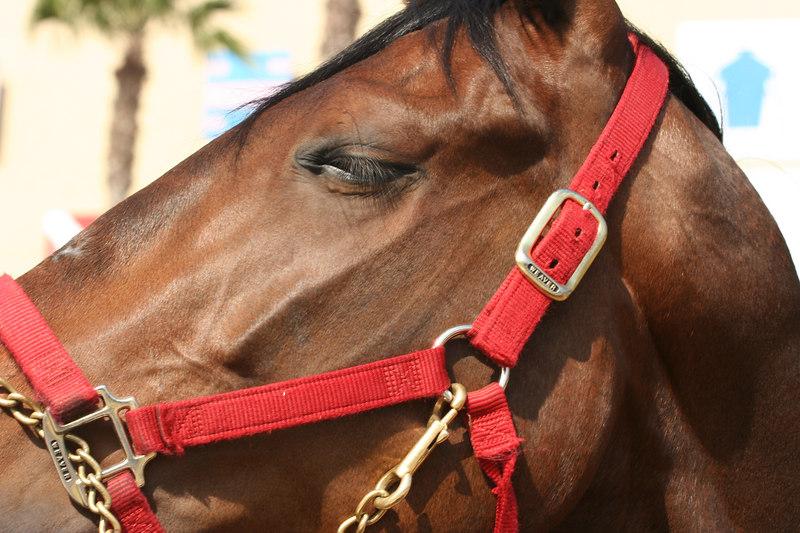 horse closeup.jpg