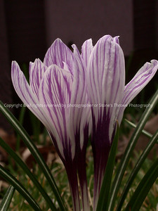 016-flower-nlg-05apr05-7603