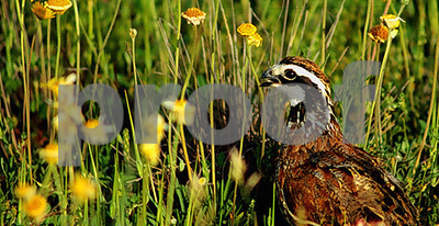 statewide-quail-symposium-aug-1618