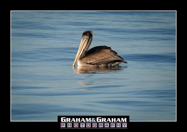 Daily Manhattan Beach Photo 11/19/17